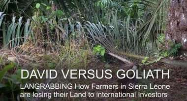 David versus Goliath: How farmers in Sierra Leone are fighting against Landgrabbing