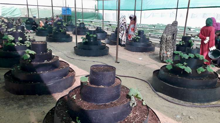 Circular gardens are being used alongside hydroponic gardens in Camp Zamzam in North Darfur