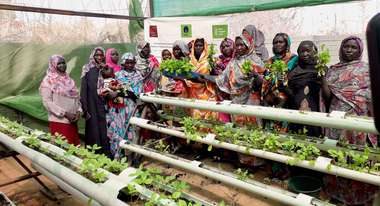 Women from internally displaced families are growing vegetables using hydroponic gardens in Camp Zamzam in North Darfur
