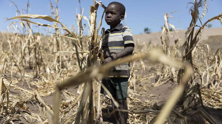 A boy from Salima, Malawi, standing in a dry field with dead plants