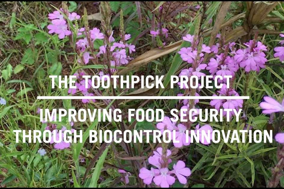 The Toothpick Project