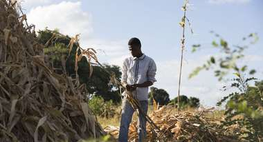 22-year-old Hajj Thomson holds a dried corn plant up.