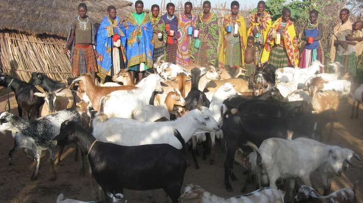 Women's groups care for the goats together. This is a novelty in Karamoja, where animals traditionally belong to the men.