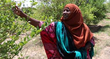 Duerre in Somaliland 2017 drought in Somaliland 2017