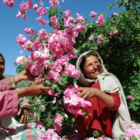 Three children playing with rose blossoms.