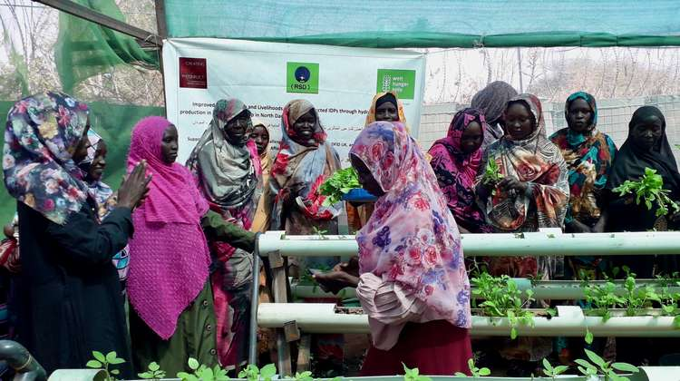 An innovative irrigation system allows women in Camp Zamzam to grow their own food