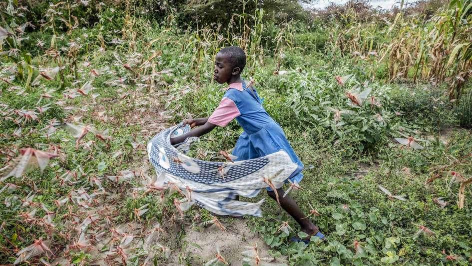 Threat of a New Plague of Locusts in Kenya - Welthungerhilfe