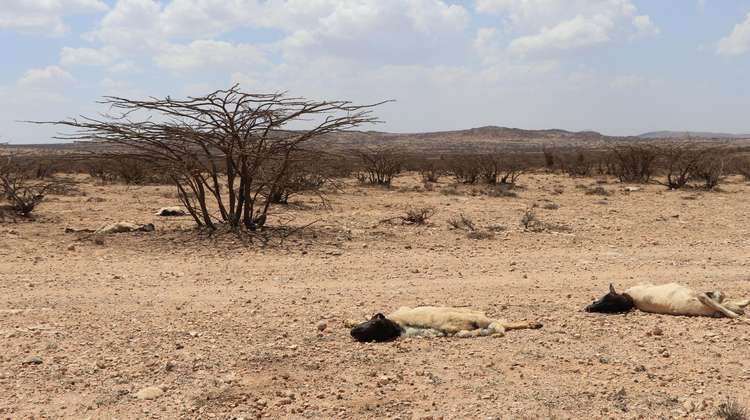 Drought in Somaliland in 2017