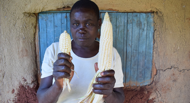 A farmer holding up a small and a large corncob
