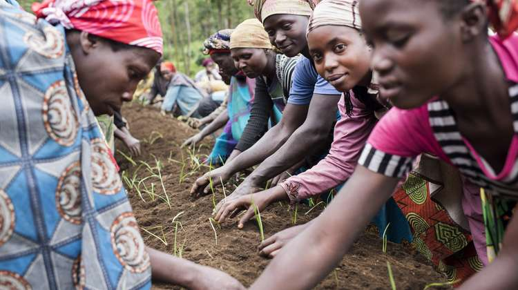 In a Welthungerhilfe project in North Kivu, Democratic Republic of Congo, people are learning methods of vegetable cultivation in a training garden. Garlic is planted here.